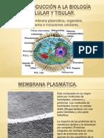 Biologia Celular y Tisular