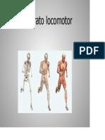 El aparato locomotor_3.pdf