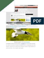 7 Consejos y Trucos Para Fotografía de Aves