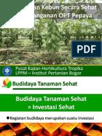 Manajemen OPT Pepaya