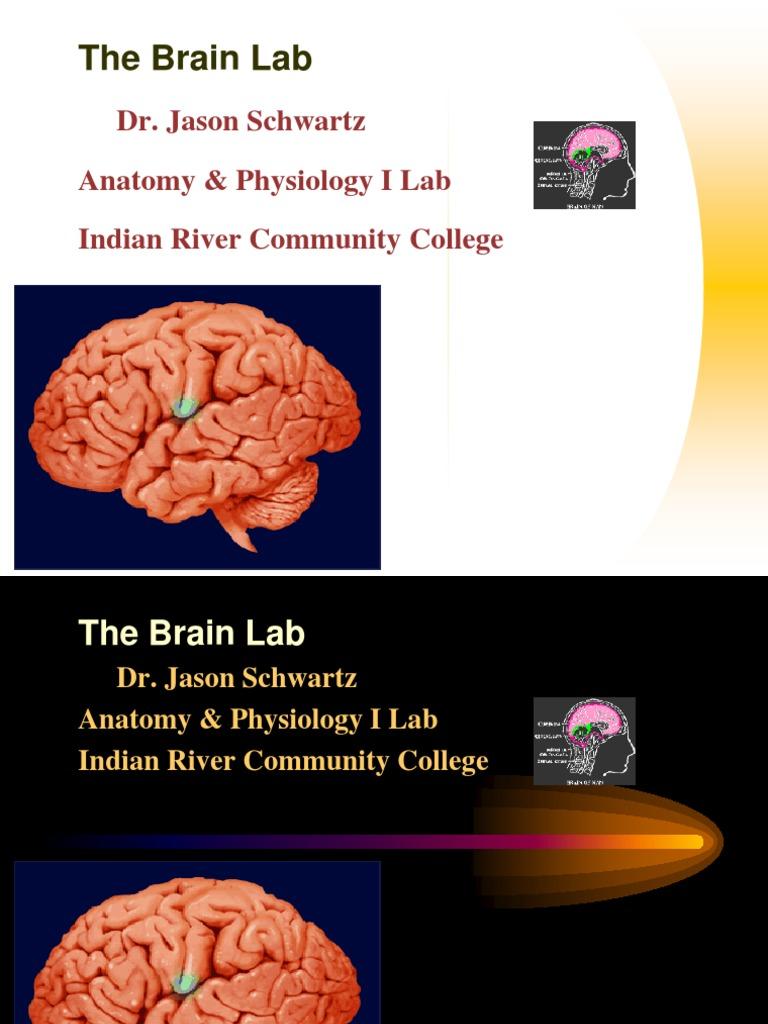 Brain | Brainstem | Neurology