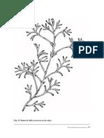 plantas-medicinales-saharauis-1