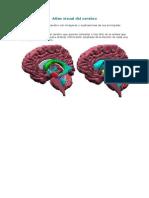 Atlas Visual Del Cerebro