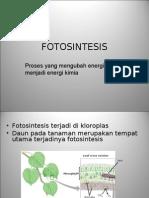Proses Terjadinya Fotosintesis