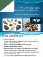 Lecture 3 Mollusc