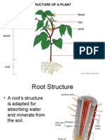 Plant Structure - Seed Plants