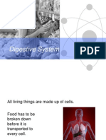 digestive system introduction