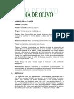 Hoja de Olivo (3)