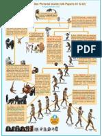 Primates Pictorial