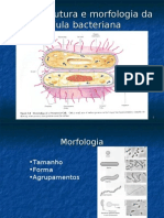 Ultraestrutura e Morfologia Bacteriana 4