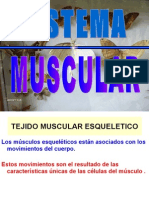 4959861 Sistema Muscular
