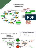 ciclodekrebs-110617191032-phpapp01