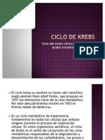 83143468 Ciclo de Krebs