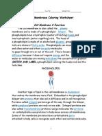 Cell Membrane Coloring Worksheet - KEY
