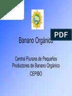 Consorcio - Cepibo - Banano Organico - Piura