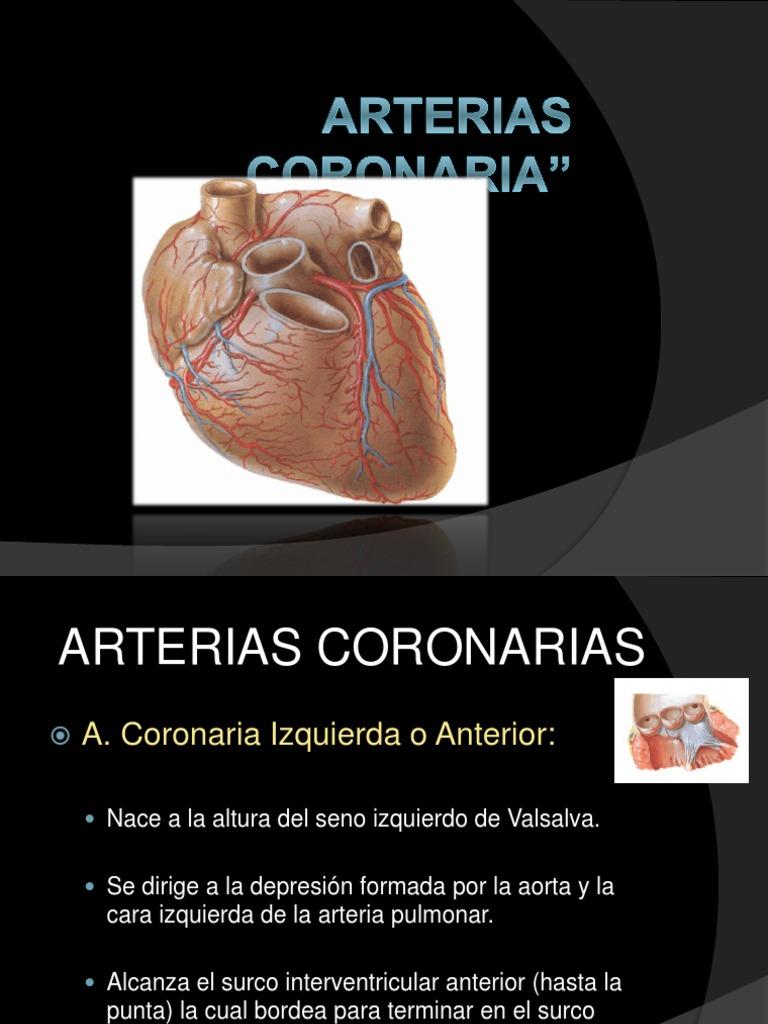 anatoma-coronaria-expo-1233693337780263-1