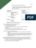 Infecciones de Piel y Partes Blandas UP4