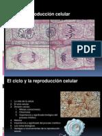 2. Division Celular Mitosis y Meiosis