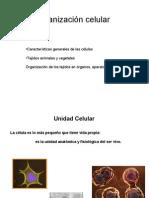 Mi_clase_2__09-10_tejidos,_organos,_aparatos,_sistemas