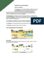 EL TRÁNSITO DE LA ENERGÍA EN LOS ECOSISTEMAS.pdf