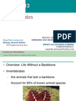 Chapter33 Invertebrates