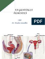 Organa Genitalia Feminina Terjemhan