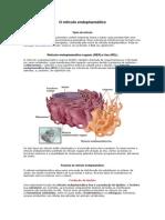 O retículo endoplasmático