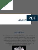 Magnesio.pptx