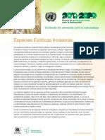undb-factsheet-ias-es.pdf