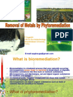 Removal of Metals by Phytoremediation