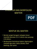 2_struktur-morfologi