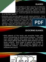 4.Glands