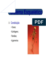 Anatomia c Sist. Esqueletico-Consideracoes Iniciais