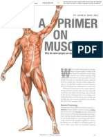 Muscle Primer