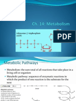 Biological Chemistry Metabolism