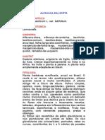 Alfavaca-da-Horta - Ocimum basilicum L. Var. Latifolium. - Ervas Medicinais – Ficha Completa Ilustrada