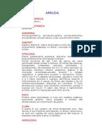 Arruda - Ruta graveolens L. - Ervas Medicinais – Ficha Completa Ilustrada