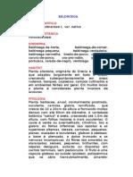 Beldroega - Portulaca oleraceae L. Var. Sativa. - Ervas Medicinais – Ficha Completa Ilustrada