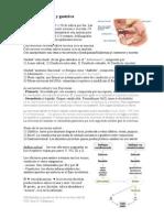 Fisiologia - Digestivo II - Secrecion Salival y Gastrica