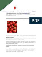 Pimenta especies.docx