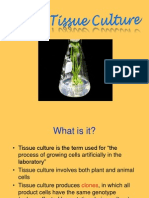 Plant Tissue Culture and Applications