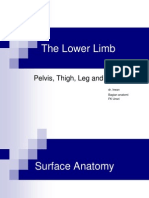 1 the Lower Limb
