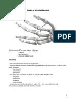 Oasele şi articulaţiile mâinii