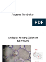 Anatomi Tumbuhan