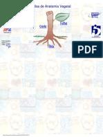 Atlas de Anatomia Vegetal - Ibusp