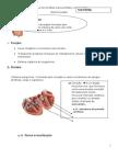 Apostila de s.circulatorio by Silanea