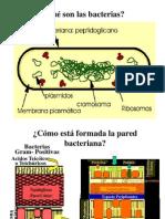 1 Bacteriología