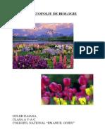 Portofoliu de Biologie-Radacina