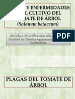 Plagas y Enfermedades Del TOMATE de ARBOL