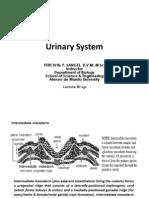 16 Urinary System